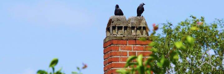 Vogelnest verwijderen schoorsteen
